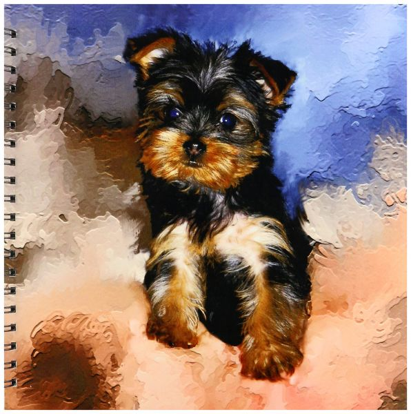 Dogs Toy Yorkie Toy Yorkie Puppy Drawing Book 12 By 12 Inch